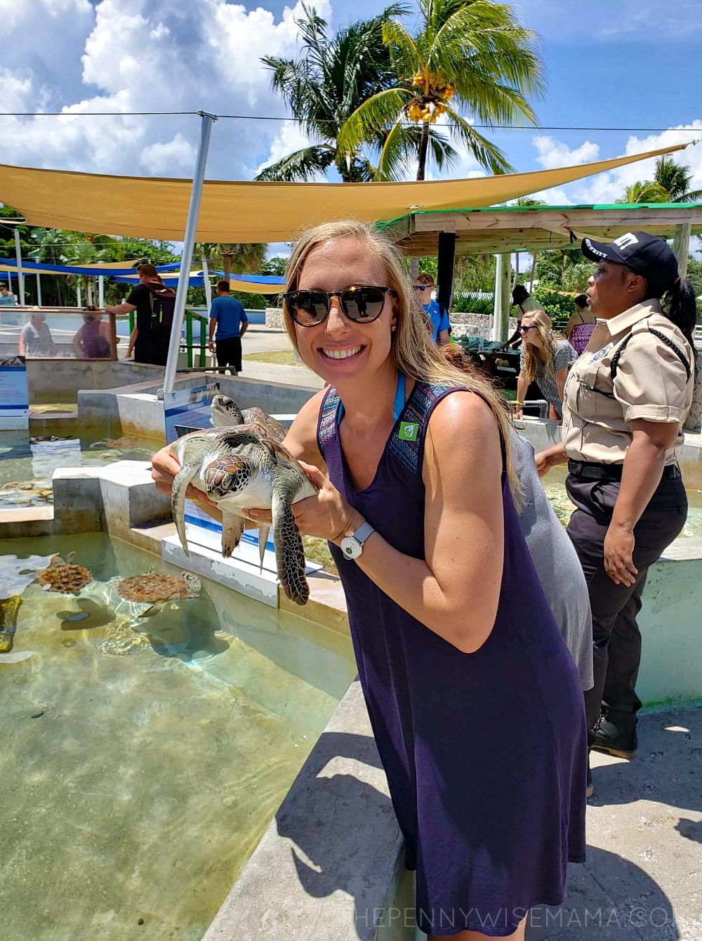 Carnival Stingray and Turtle Excursion in Grand Cayman